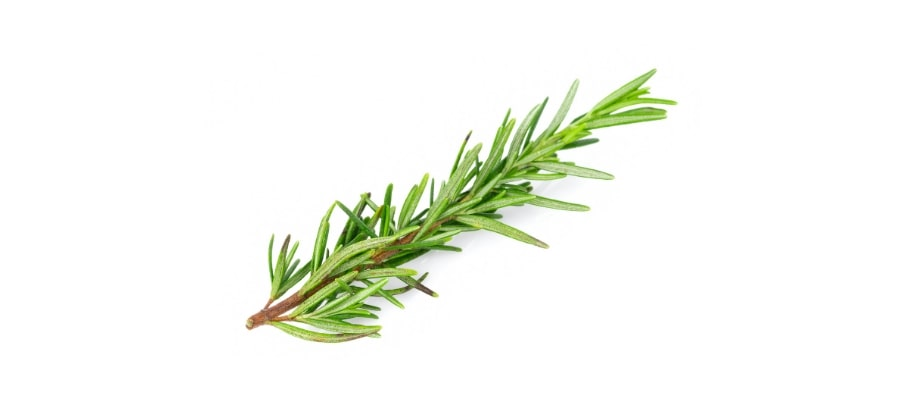 Rosemary plant can be used to keep away mosquitoes.
