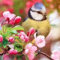 Easily Attracting Songbirds to Your Backyard