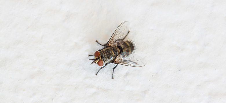 A cluster fly on white background.