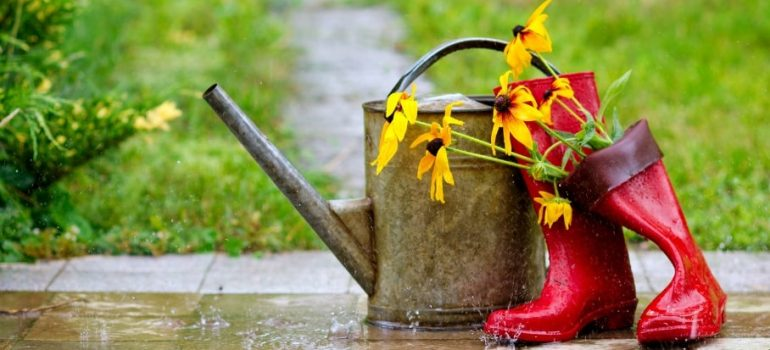 What you can do to fix the waterlogging of your soil.