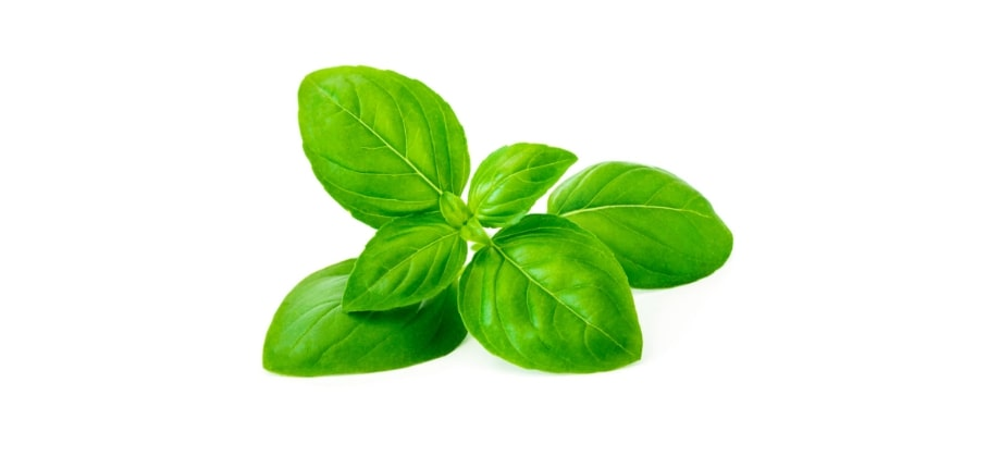 Basil is used as a mosquito deterrent.