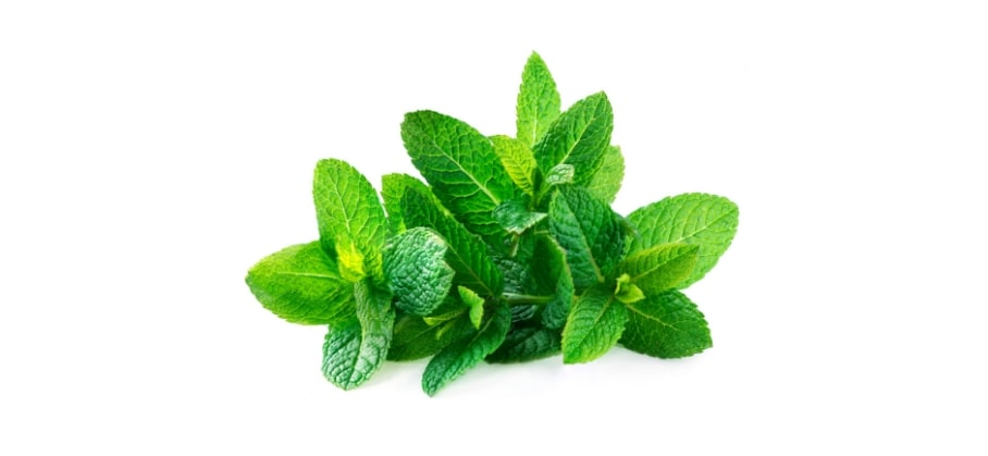 Peppermint plant can be used to keep control a mosquito infestation.