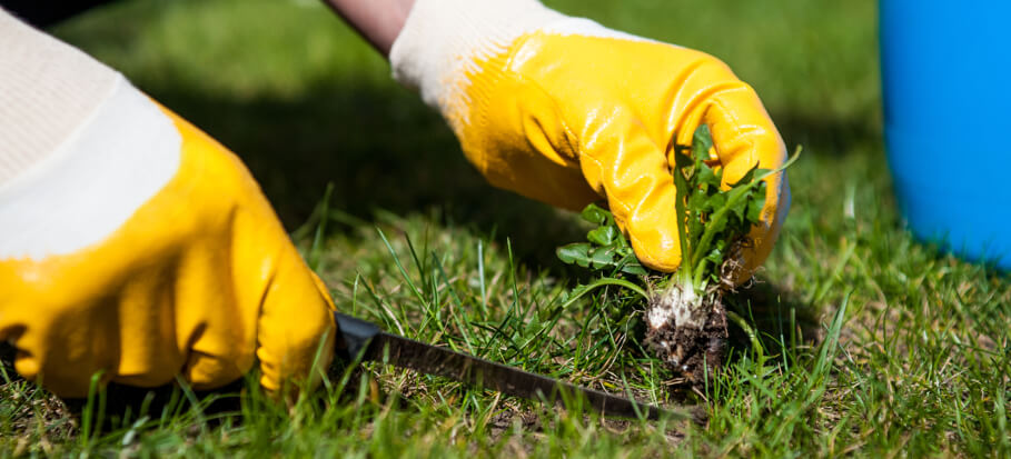Killing weeds without killing the grass