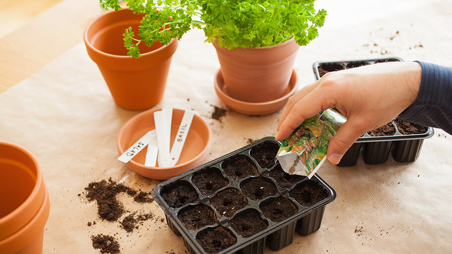 planting vegetable seeds at home