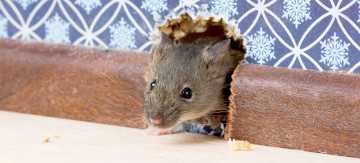 Natural Ways to Get Rid of Mice - Featured Image