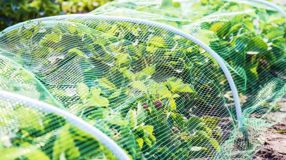 Protecting plants with garden net