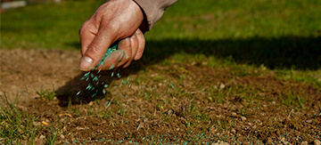 Overseeding Lawn - Featured Image