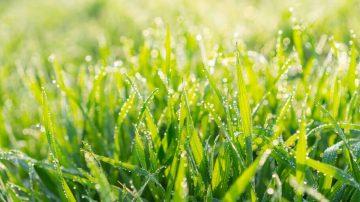 Lawn care by season