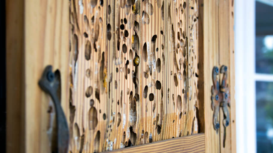 How to Treat a Woodworm Infestation