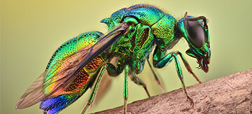 10 Weird Australian Insects You Won't Believe Exist - Featured Image