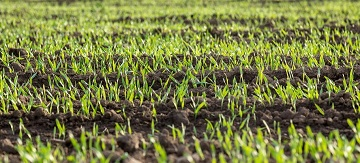 How to Topdress Your Lawn the Right Way - Featured Image