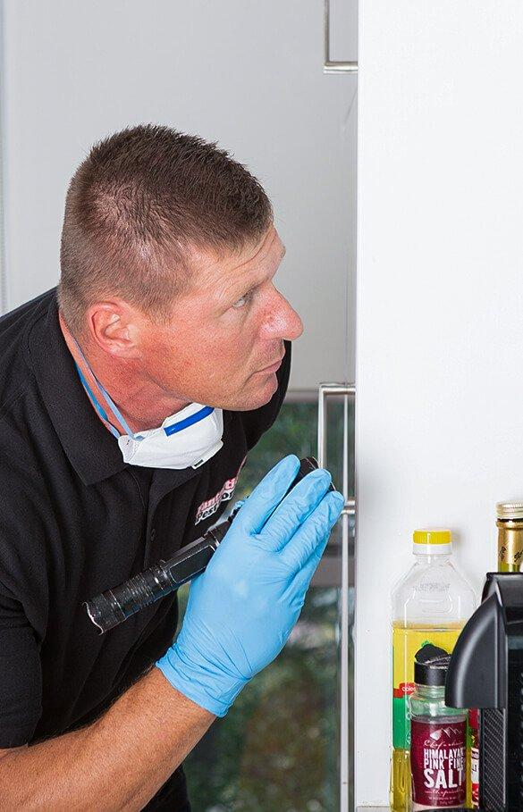 pest control technician inspecting surfaces for insects