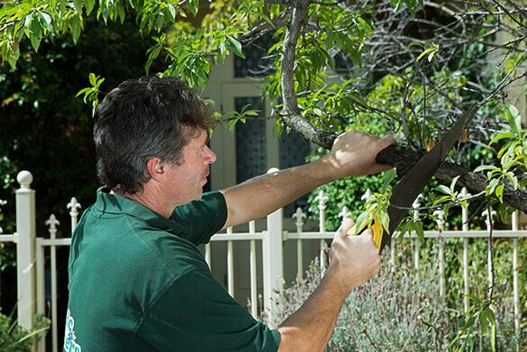 Tree pruning services from Fantastic Gardeners