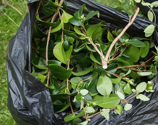 A close up of a bag of green waste